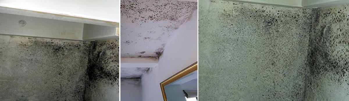 Mould removal solutions for all your mould problems