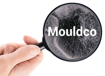 Mouldco is Melbourne's mould removal experts